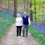 Couples supérieurs marchant dans la forêt images libres de droits