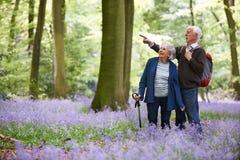 Couples supérieurs marchant par le bois de jacinthe des bois images stock