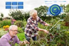 Couples supérieurs moissonnant la groseille au jardin d'été Image libre de droits