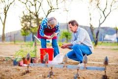 Couples supérieurs plantant des jeunes plantes dans le sol, jardin Photos stock