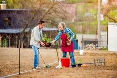 Couples supérieurs plantant la jeune plante dans le sol dans l'arrière cour Photo stock