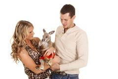 Couples tenant le regard de kangourou à lui Photo libre de droits