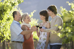 Couples Toasting Wine Glasses In Vineyard. Two couples toasting wine glasses in vineyard Royalty Free Stock Photo