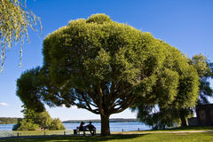 Couples under big tree. Couple sitting under big tree by the sea Stock Image