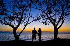 Couples under the tree at sunset. A couple is holding hands under the tree few minutes after sunset Royalty Free Stock Photo