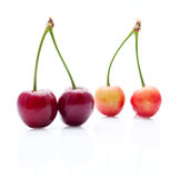 The couples of underripe cherries Royalty Free Stock Photos
