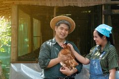 Couples are working at the chicken egg farm. And men are holding hens. Both look happy and healthy.  stock photo
