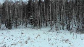 Couplez des personnes se tenant près des actions neigeuses de forêt Couplez des personnes devant la forêt en hiver banque de vidéos