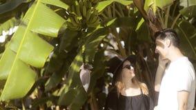 Couplez explorer la nature - bananier, fleur et élevage de fruits de examen sur un arbre vert Ils parlent au téléphone, le sourir clips vidéos