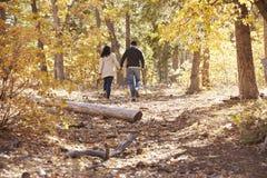Couplez la hausse dans une forêt tenant des mains, vue arrière éloignée images stock