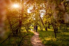 Couplez la marche au printemps jeune homme et fille de forêt tenant des mains au coucher du soleil Photo libre de droits