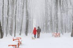 Couplez la marche avec un chien en parc neigeux Photos stock