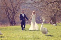 Couplez la marche en parc entouré par des cygnes Photographie stock