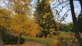 Couplez la marche le long de l'allée d'automne en parc de ville banque de vidéos