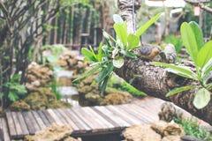 Couplez la statue d'oiseaux sur un café de jardin de fond d'arbre Photo stock