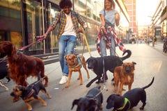 Couplez le marcheur de chien avec le groupe de chiens appréciant dans la promenade photos stock