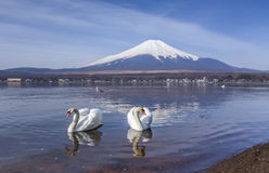 Couplez les cygnes au lac yamanaka avec le fond de Mt.fuji Photos libres de droits