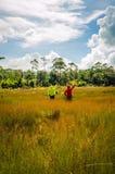 Couplez rester avec les mains augmentées à un champ de blé Photo libre de droits