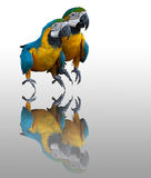 Couplues of blue macaw royalty free stock images