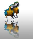 Couplues de macaw bleu Images libres de droits