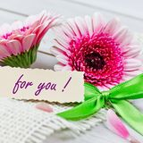 Coupon with flowers. For you coupon with pink flowers Royalty Free Stock Image