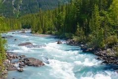 Coups de pied du fleuve de cheval photos libres de droits