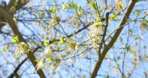 Coups de vent à la fleur d'arbre après pluie clips vidéos