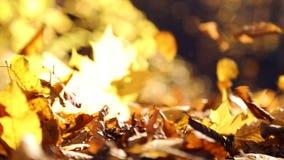 Coups de vent de feuilles d'automne Feuilles d'automne dans les coups de vent de parc Feuilles d'automne en parc dans la campagne banque de vidéos