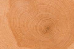 Coupure d'arbre Photo libre de droits