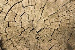 Coupure d'un arbre Photos libres de droits
