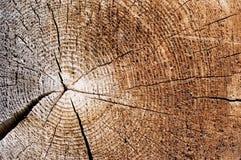Coupure d'un vieil arbre. Fin vers le haut Photo stock