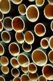 Coupure de bambou Image stock