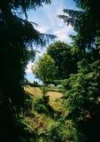 Coupure de la forêt d'été images libres de droits