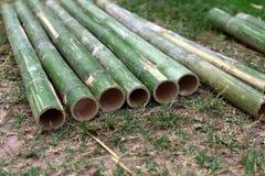 Coupure en bambou fraîche de pipe photographie stock