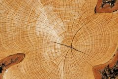 Coupure en bois Images stock