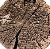 Coupure en bois de logarithme naturel photo libre de droits
