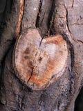 Coupure en forme de coeur de branche d'arbre dans la couleur naturelle Photographie stock