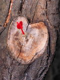 Coupure en forme de coeur de branche d'arbre dans la couleur naturelle avec un dard rouge Photos stock