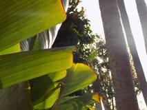 Coupure tropicale Photographie stock libre de droits
