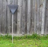 Coupures d'herbe de râtelage de râteau, outils de jardin Images libres de droits