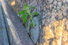 Coupures d'herbe par des tuiles de granit Image stock