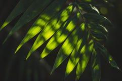 Coupures de lumière du soleil par les feuilles image libre de droits