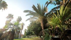 Coupures lumineuses du soleil par les feuilles des palmiers qui se développent en parc Valence, Espagne banque de vidéos