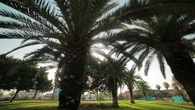 Coupures lumineuses du soleil par les feuilles des palmiers qui se développent en parc Valence, Espagne clips vidéos