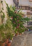 Cour avec des fleurs photo libre de droits