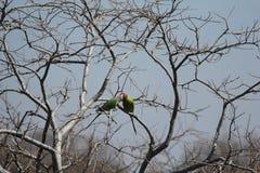 Cour de deux oiseaux sur la branche d'arbre Photo libre de droits