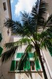Cour de palmier (1) Image libre de droits