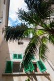 Cour de palmier (2) Images libres de droits