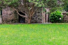 Cour tranquille avec des pissenlits dans le quart historique de Colonia d Photos libres de droits