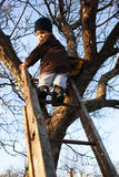 Courageous child on ladder. Courageous child climbing on ladder in tree, looking back Royalty Free Stock Photo